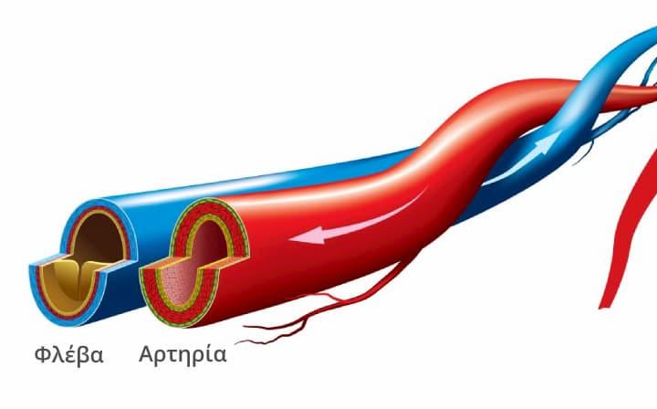 Φλέβα και Αρτηρία - Αγγειοχειρουργός